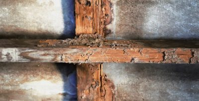 How to Prevent Wet Rot in London