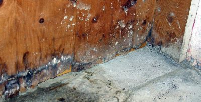 What Causes Wet Rot