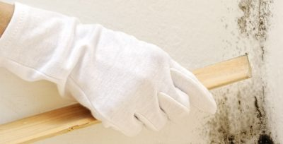 How to Deal with Dry Rot
