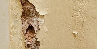 How to Eliminate Dry Rot
