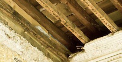 What are the Symptoms of Dry Rot?